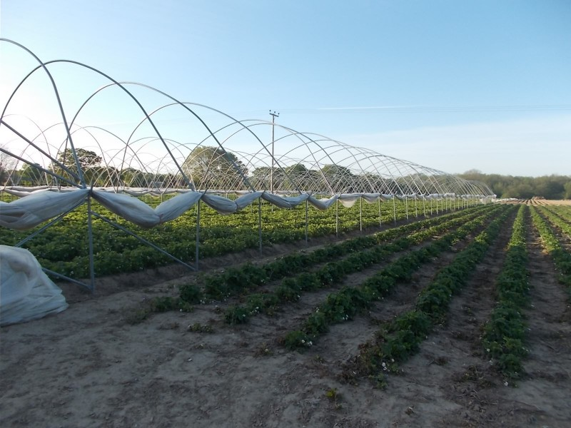 Crops growing